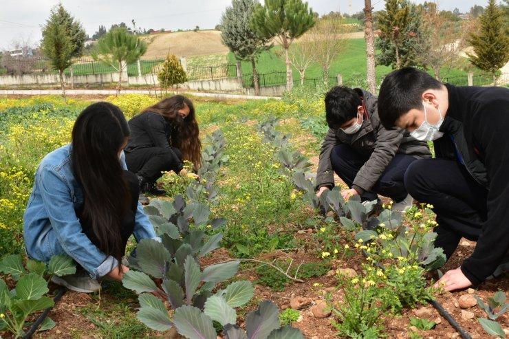 Lise Öğrencileri Okul Bahçesinde Sebze-meyve Yetiştiriyor