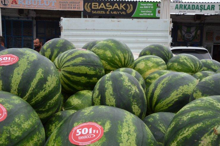 Antalya'da Mevsimin İlk Karpuzu 7 Lira