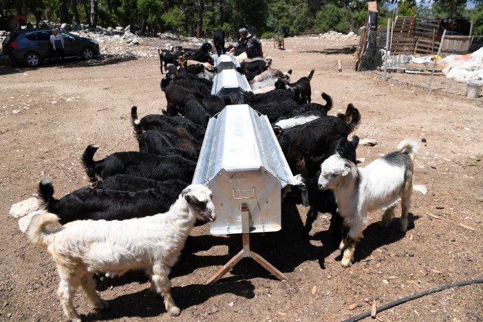 konyaaltinda-hayvanlar-zengin-otlarla-besleniyor-9653-dhaphoto2.jpeg