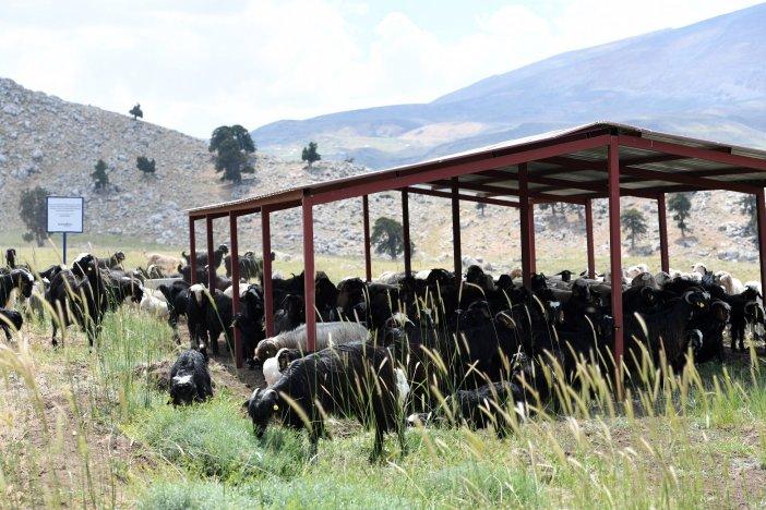 konyaaltinda-hayvanlar-zengin-otlarla-besleniyor-9653-dhaphoto4.jpeg